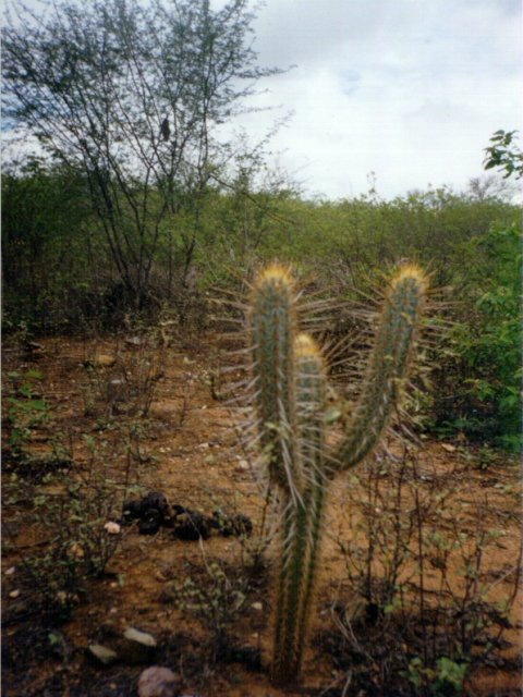 A cactus at the confluence