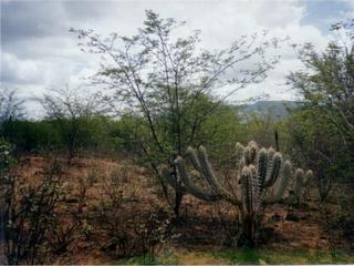 #1: Caatinga vegetation at the confluence