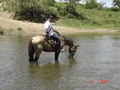 #8: Travessia a cavalo. Horse riding