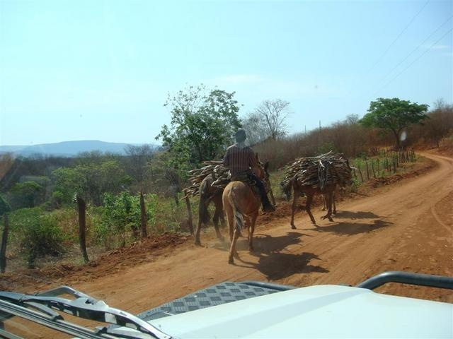 Donkeys and mules are frequently used as cargo animals