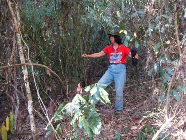 Mata densa, dificil de caminhar. Hard walk to CP through the dense bush.