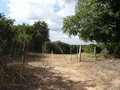 #6: Acceso a la plantación de café. Access to coffee plantation