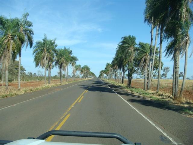 Beautiful road between Campo Grande and Aquidauana
