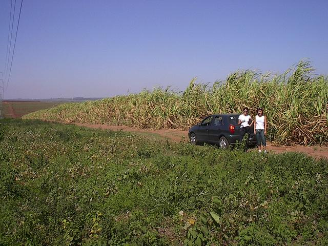 South view. Valeria and Cris at the edge of sugarcane plantation, 54m from confluence point.