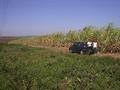 #4: South view. Valeria and Cris at the edge of sugarcane plantation, 54m from confluence point.
