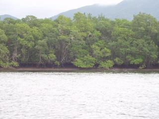 #1: Confluence located 90 m inside the mangroves.