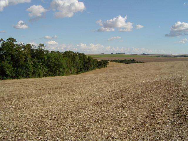 View of the area around the CP showing soya stubble