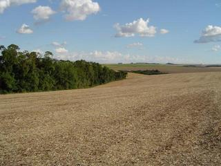 #1: View of the area around the CP showing soya stubble