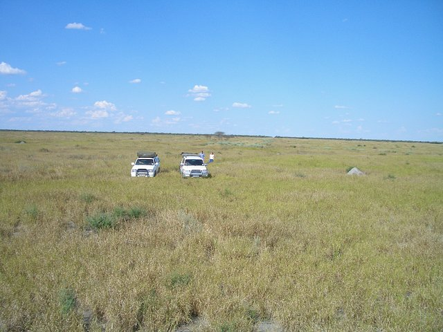 The Savuti Marsh - End of cutline on horizon
