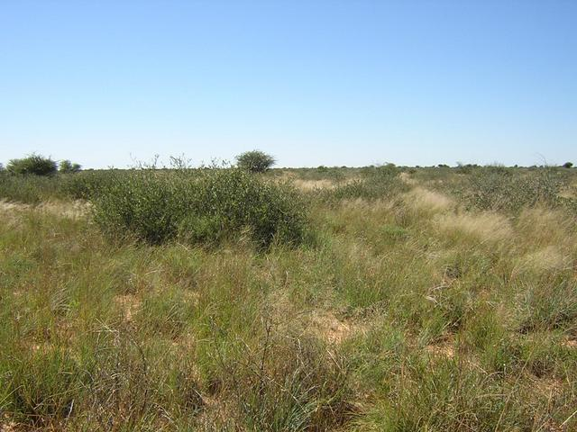 Confluence on the right hand front side of the large bush in the middle of the picture