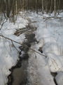 #7: The frozen swamp