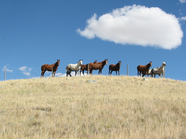Horses looking at us during entire hike