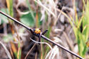 #8: A ladybird beetle crawls along barbed wire near the confluence