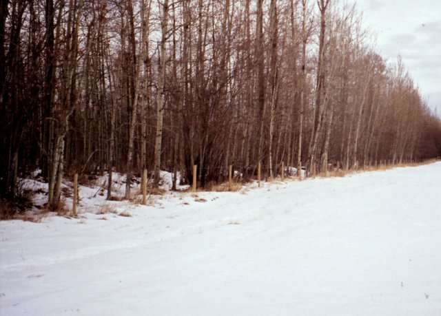 North-South oriented fenceline at the edge of the woodlot, looking north-west.  The confluence is 140m into the bush.