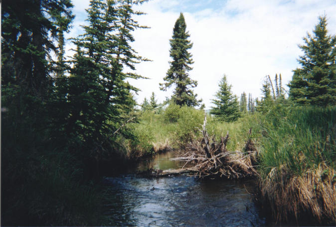 Swift moving creek flowing through muskeg near confluence.