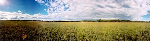 #1: 110 Degree Field of View Panoramic Looking North