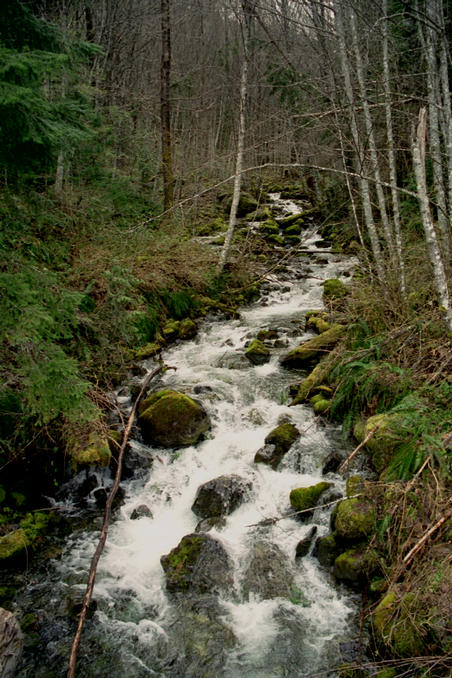 Small creek on Haslam Main logging road