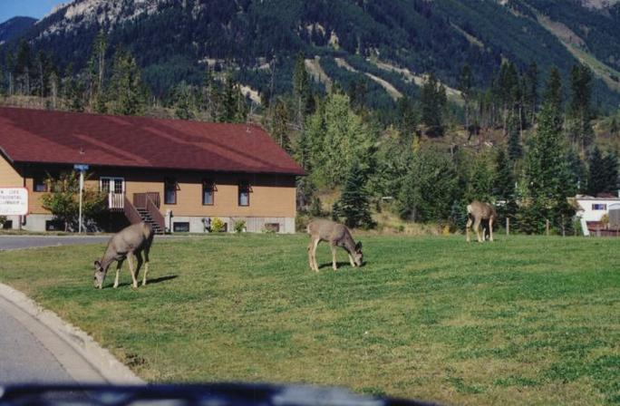 Wildlife in Elkford