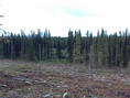 #3: Leaving the ClearCut, Approaching the Meadow