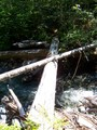 #8: where the trail crosses a tributary of the Gold River