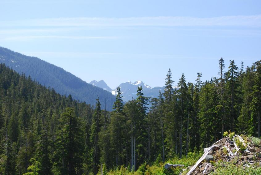 view into Strathcona Park, from the end of the road