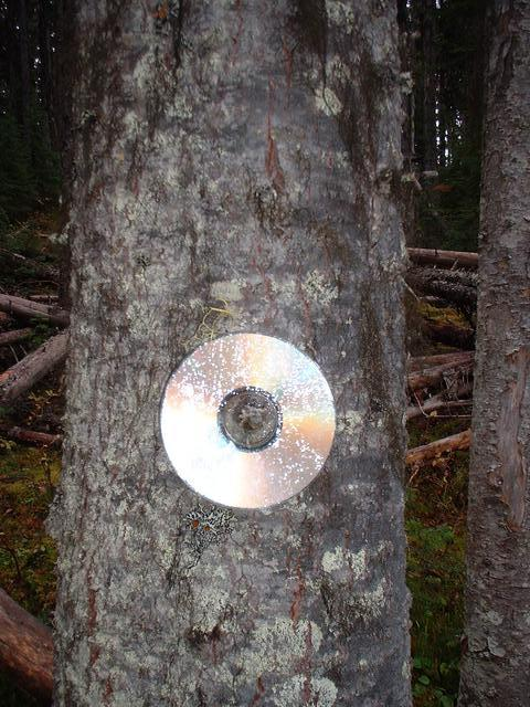 CD that the previous visitor (Camille B. Villeneuve) left behind.