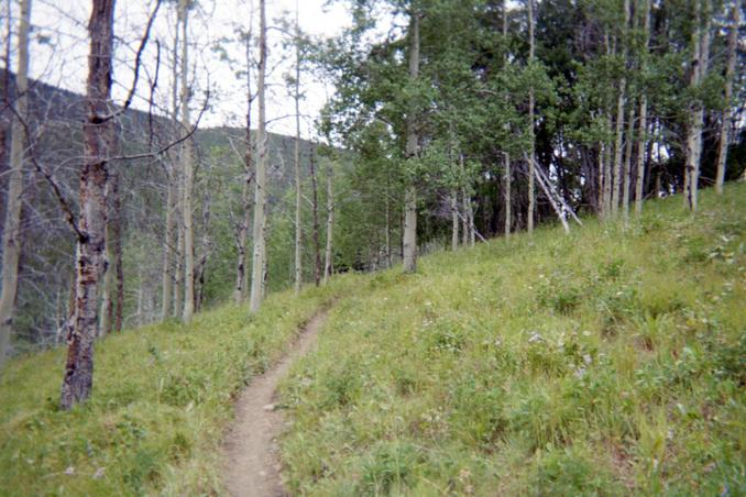 Singletrack through the alpine meadows