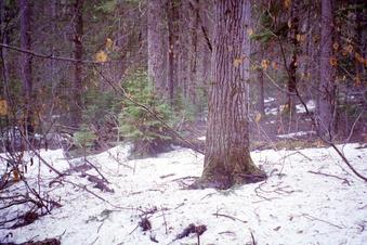 #1: Snow and wet and trees - the confluence