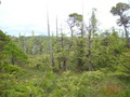#10: Stunted trees and boggy ground