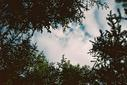 #8: Looking skyward from 55°N 120°W