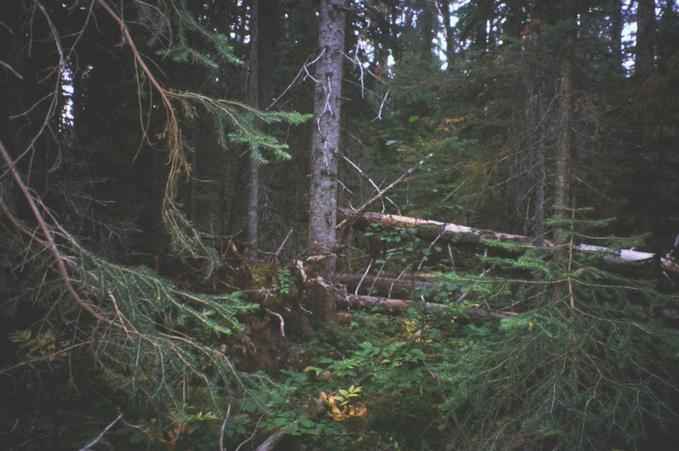 Another view of the area. Its all trees and hellish deadfall.