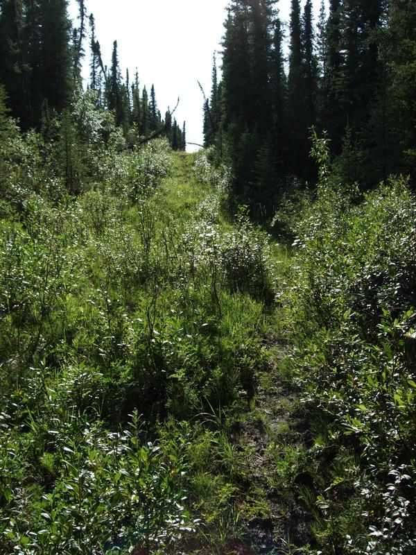Old firebreak or forest road close to confluence point