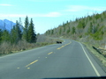 #10: black bears crossing the highway 37 not far from the starting point of the hike
