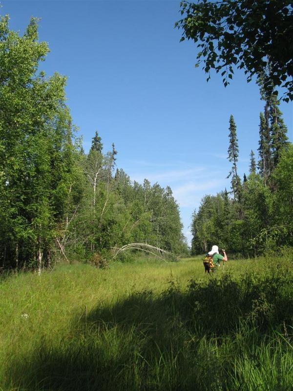 "A view of trail. The guy in the picture is 6'5"" to give you an idea of the vegetation growth. Lots of wet stuff, you can get around but will end up with wet feet at some point."