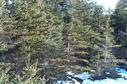 #3: thick fir forest
