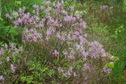 #6: Flowering shrub near the point