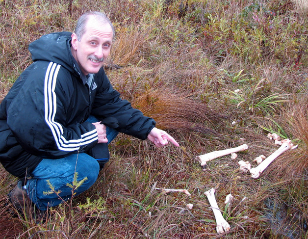 Frank looks at moose bones found on the way to the confluence point.
