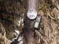 #4: Marker on dead spruce tree at 53N57W.
