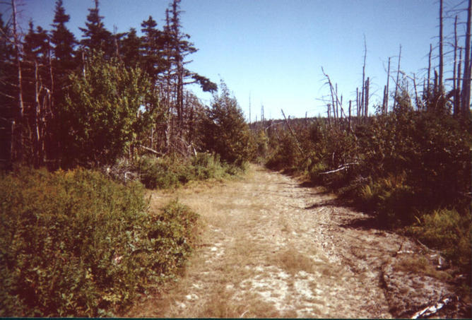 The woods road in