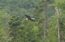 #8: Eagle guarding the point