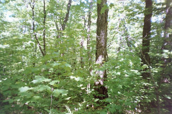 #1: At confluence - deep woods! North view.