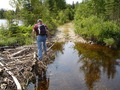 #7: Beaver dam on forest road