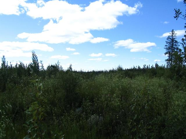 Start of the logging road leading in the direction of the Confluence Point