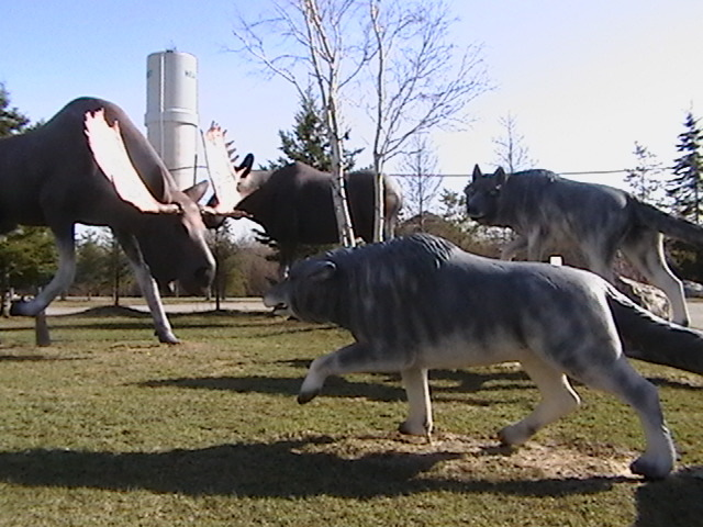 Wolves and moose at the Hearst Tourism Information Centre