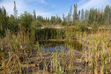 #9: Water pit near logging road