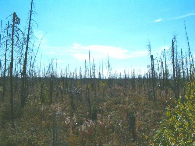 A view from the confluence of the burned forest