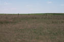 #3: Looking south.  Prairie grassland.
