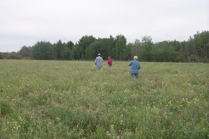 Walking south through an alfalfa field towards the confluence situated beyond the trees.