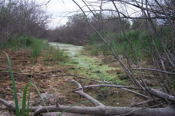 "A green, slimy ""creek"" encountered along the route."