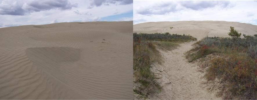 Dunes in the Great Sand Hills.
